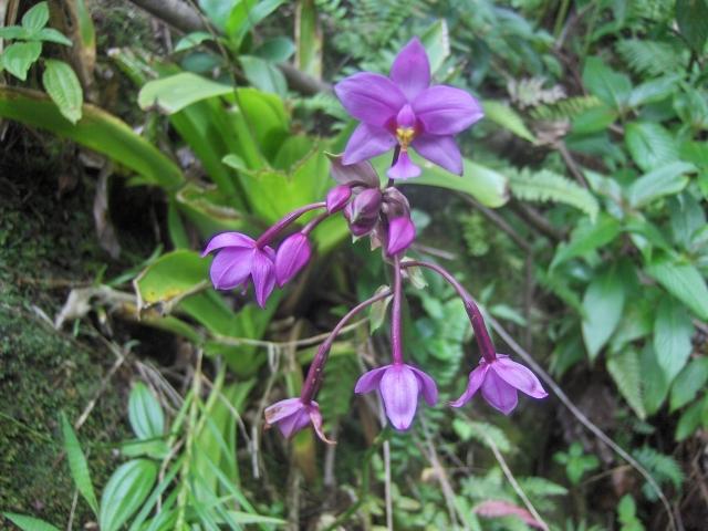 waitukubuli-trail-wntp-033