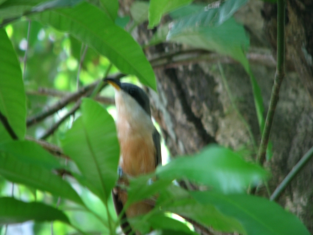 bird-on-seg-13