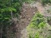 planting-tania-in-last-quarter